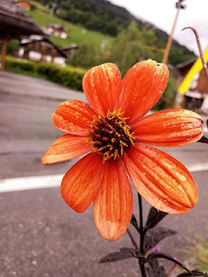 8_ Flore 2