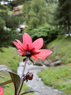6-Flore 1
