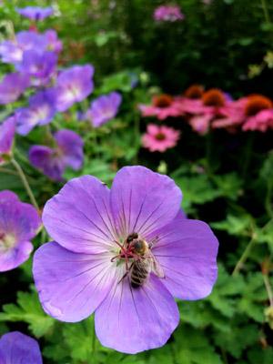 8_ Flore 3