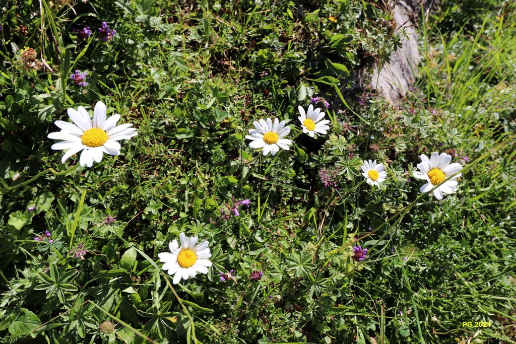 Tapis de fleurs02